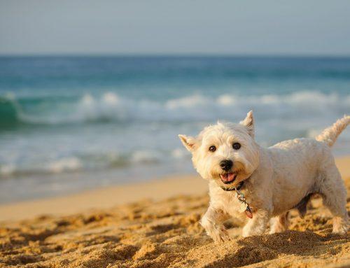 Dog-friendly Ayrshire Days Out